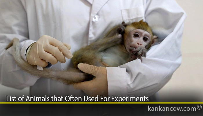 List of Animals that Often Used For Experiments